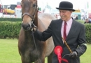 mr-drabble-with-the-yearling-hunter-winner