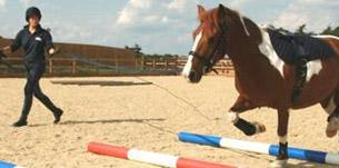 blue cross - Celebrate five years of horse care at The Blue Cross