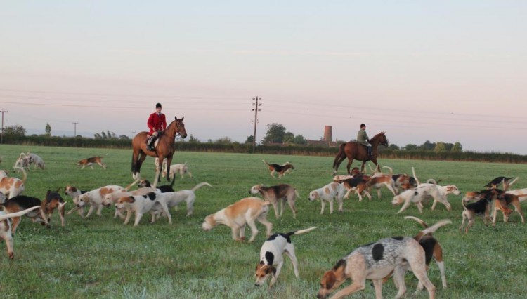 IMG 2259 750x426 - South Notts Hunt Autumn Hunting gets underway