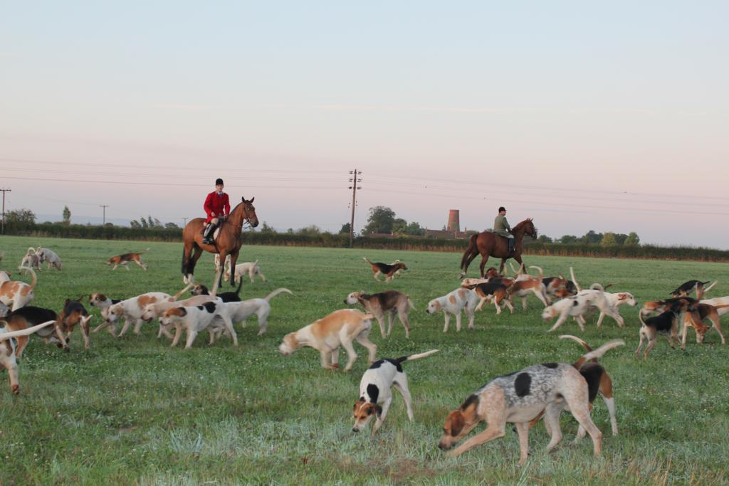 IMG 2259 - South Notts Hunt Autumn Hunting gets underway