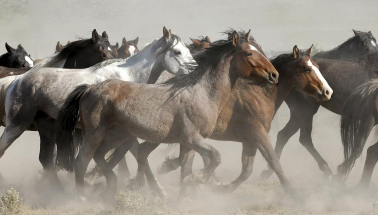 Wild Horse Taming 750x426 - Simply Breathtaking - Taming Wild Horses Naturally