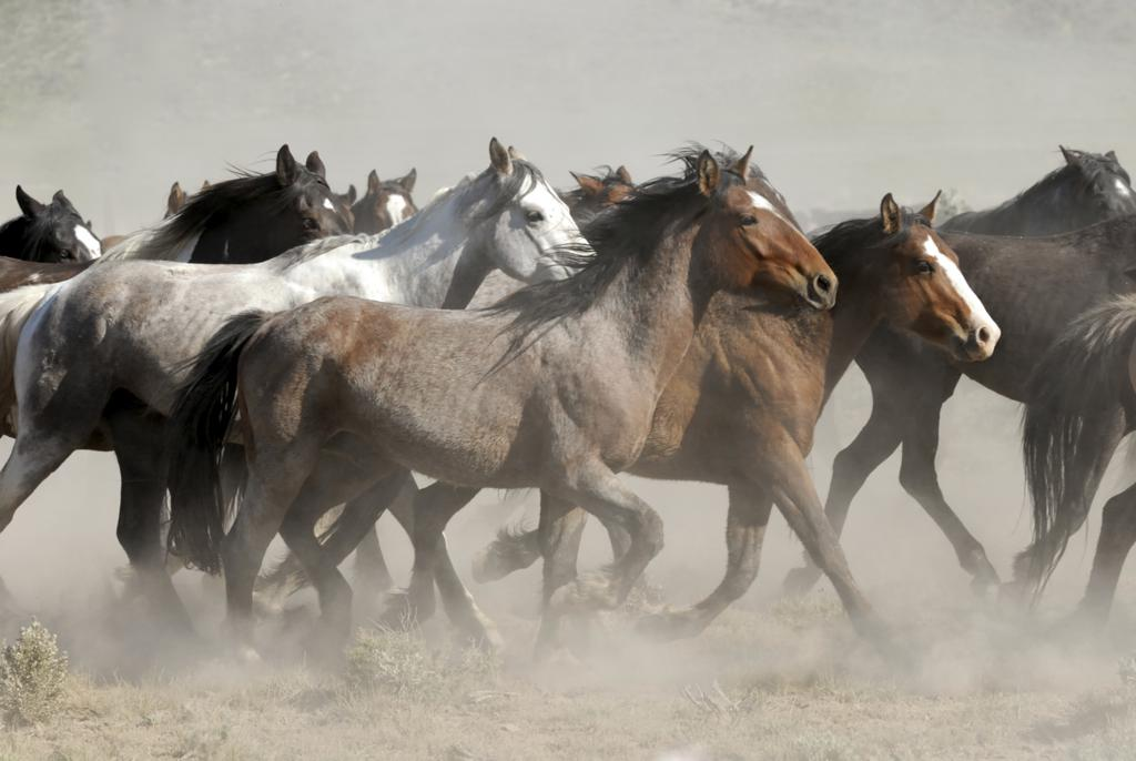 Wild Horse Taming - Simply Breathtaking - Taming Wild Horses Naturally
