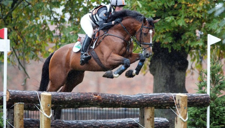 Chestnut over rails 750x426 - Looking forward to Osberton Weekend