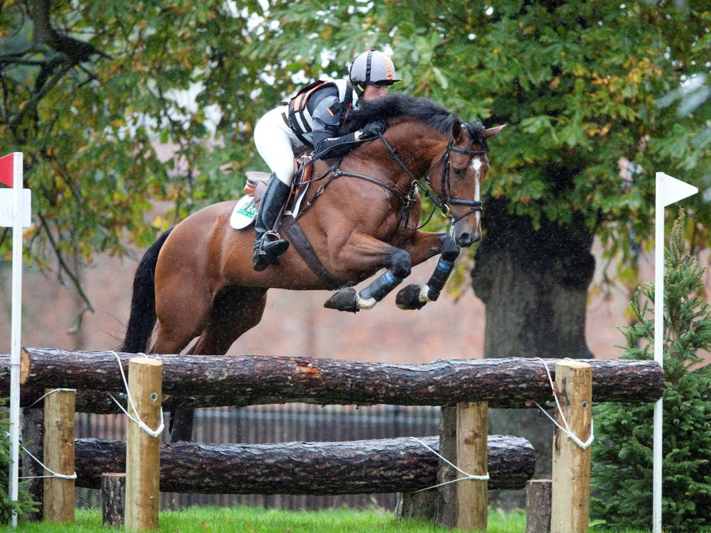 Chestnut over rails - Looking forward to Osberton Weekend