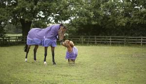 Countrywide Equine Event image - catering for all needs, big or small