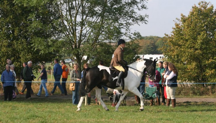 IMG 0893 750x426 - Southwell Show