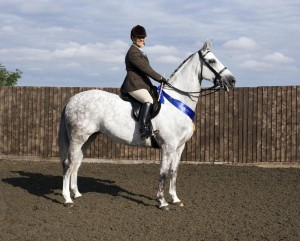 WaroussiaSallyNeedhamSMRphotos 300x241 - 2011 SEIB Search For a Star Qualifier at Vale View Equestrian Centre