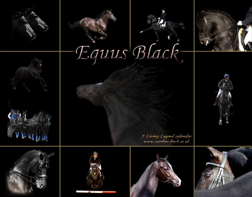 EQUUS BLACK UPDATE front cover copy - Living Legend Dressage Calendars for 2012 available for Christmas gifts
