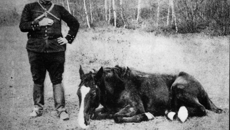 Wounded Horse awaiting a Blue Cross ambulance 750x426 - Real war horses remembered in new online archive