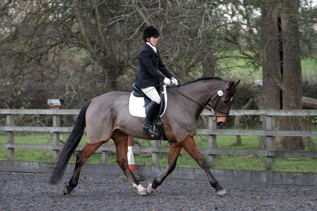 IMG 1855 - Hinckley Dressage Competition Results