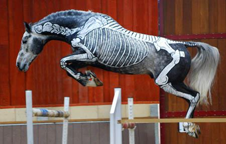 gillian higgins jump2 - All Systems Go for Launch of Gillian Higgin's New Book, Horse Anatomy for Performance