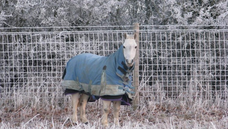 IMG 2062 2 750x426 - Managing Horses in Winter - How not to get caught out