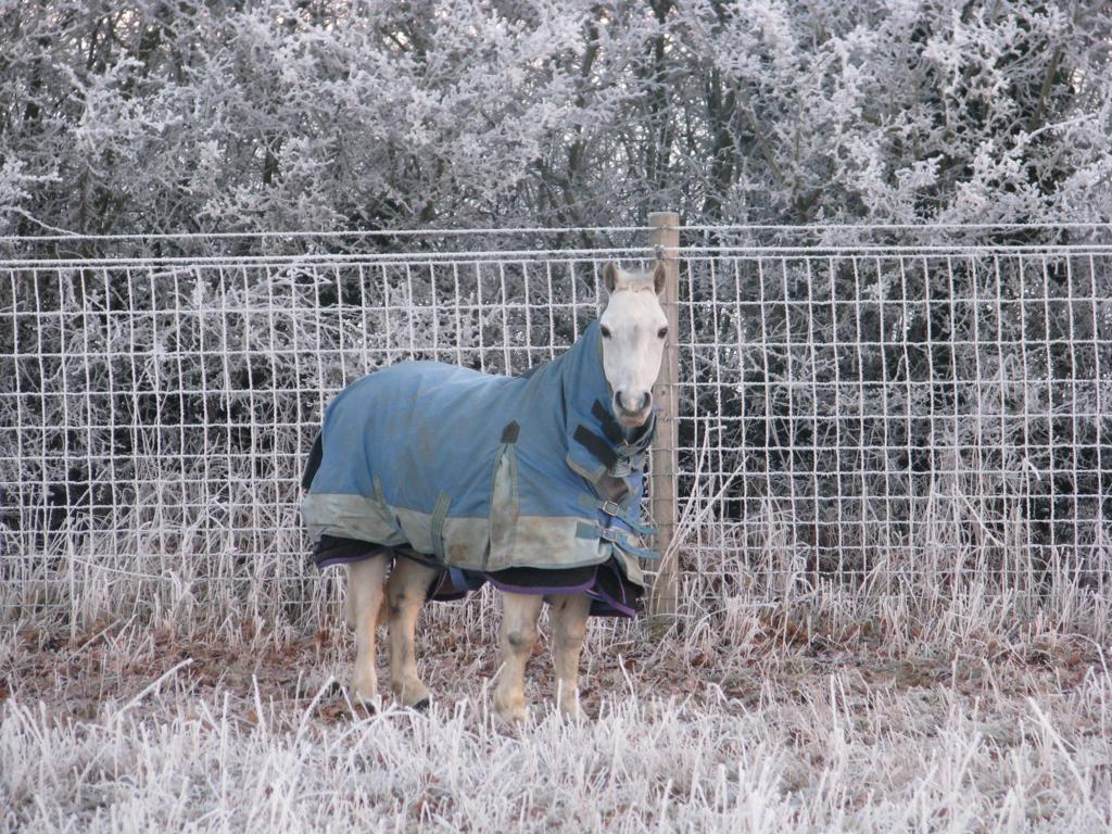 IMG 2062 2 - Managing Horses in Winter - How not to get caught out
