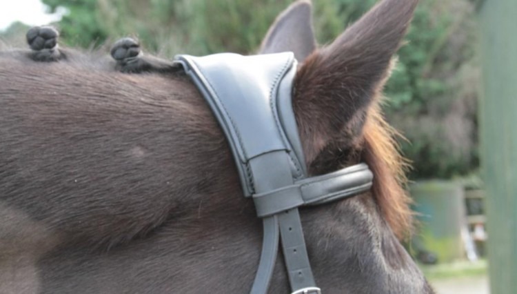 Kinda 469 750x426 - Ergonomic bridle headpiece launches that reduces poll pressure and may abate headshaking