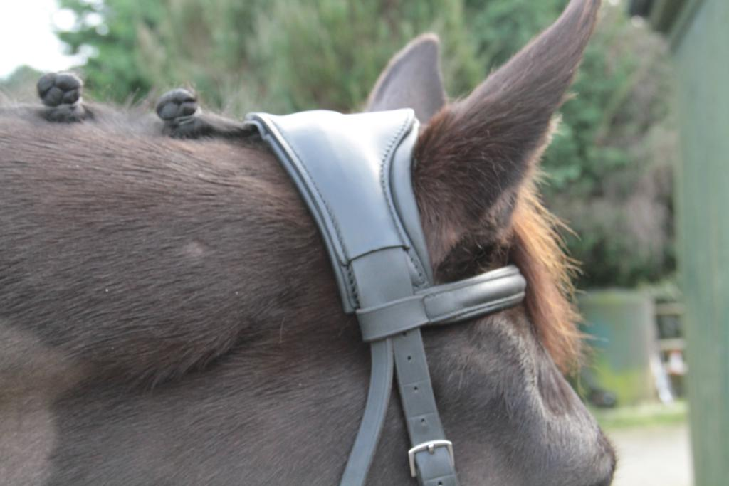 Kinda 469 - Ergonomic bridle headpiece launches that reduces poll pressure and may abate headshaking