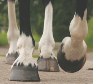 Healthy hooves close up 300x271 - Join the Horslyx Healthy Hooves Challenge and win 6 months of Horslyx!