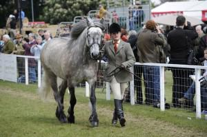 Highland 10pnRWHS255. one of Queens horses 300x199 - Royal Windsor Horse Show celebrates 69th year with record number of entries