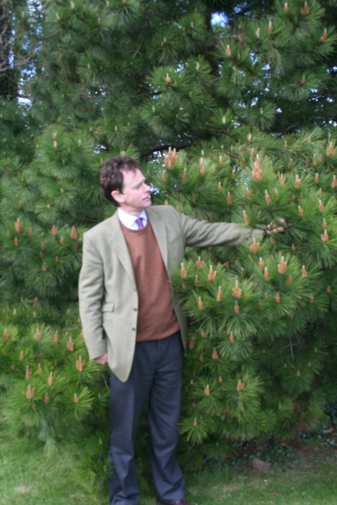 Bedmax 2 - BEDMAX launches Jubilee Pine Tree Campaign