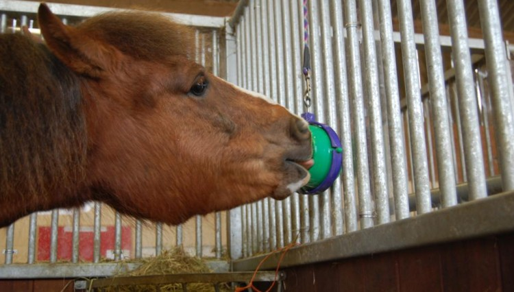 Blue Cross Spirit enjoying his Likit 750x426 - A lick of love from rescue horses at Blue Cross
