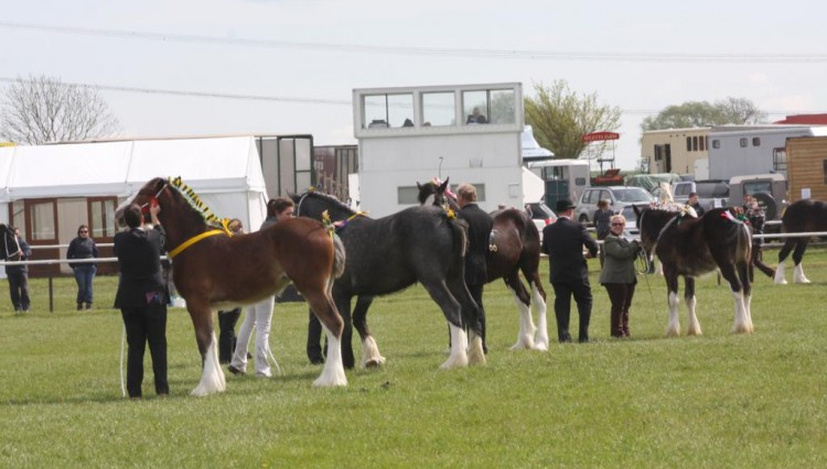 IMG 3676 750x426 - Local competitors shine at Newark & Notts Show