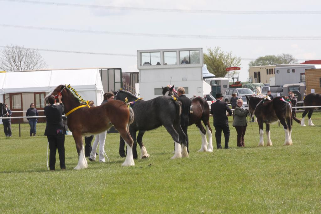 IMG 3676 - Local competitors shine at Newark & Notts Show