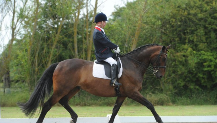Lee Pearson.Gentleman 750x426 - Boost in Support Needed for Paralympic Dressage Preparation