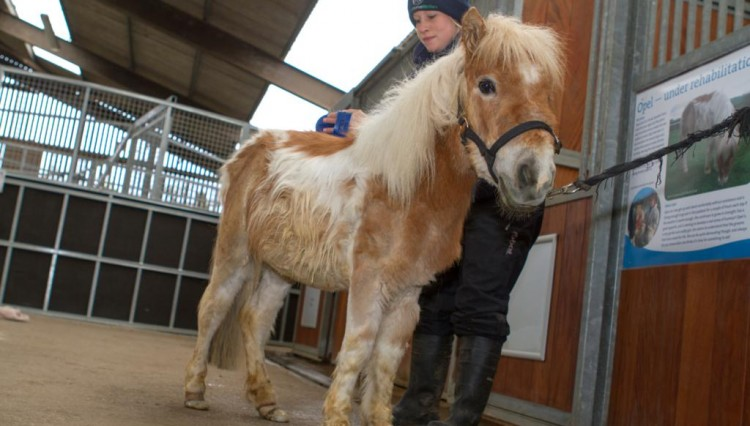 Opel4 resized 750x426 - Special event for a special pony at World Horse Welfare, Somerset