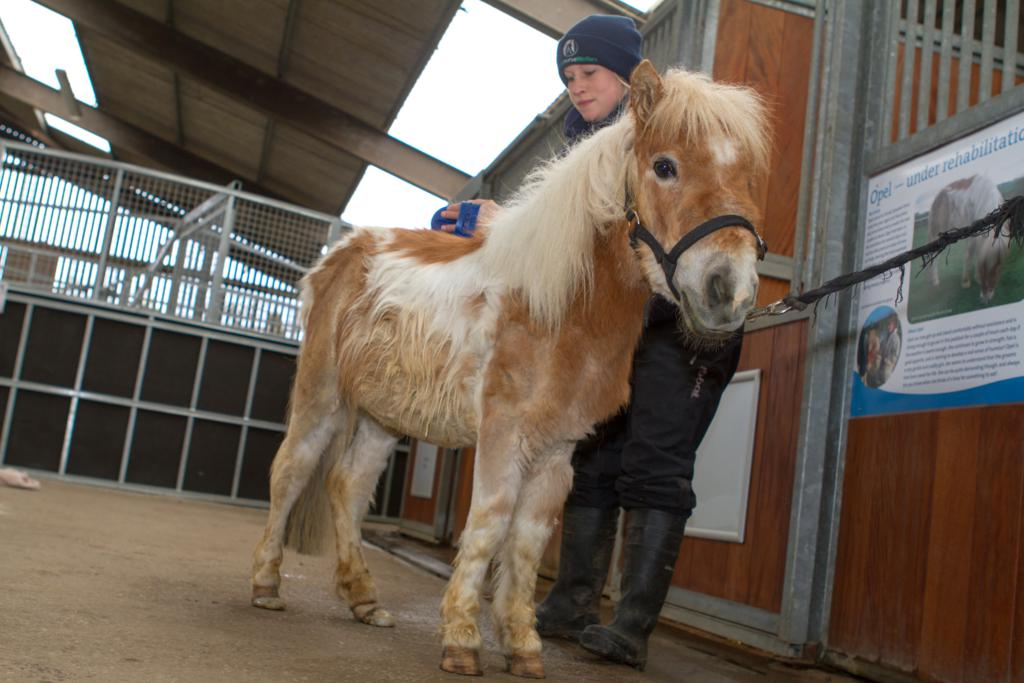 Opel4 resized - Special event for a special pony at World Horse Welfare, Somerset