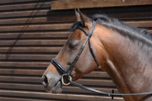 Patent Snaffle Bridle