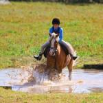 Pony Club Horse Mud Water1 150x150 - Saddle up for summer!