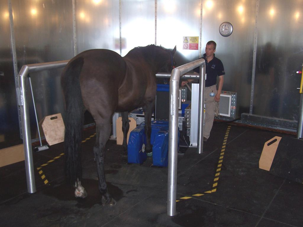 Horse having MRI - The Real Cost of Lameness