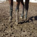 Muddy Horse - Weather Tries to Cause Havoc Again!