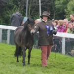 Exmoor Pony Anchor Fairytale