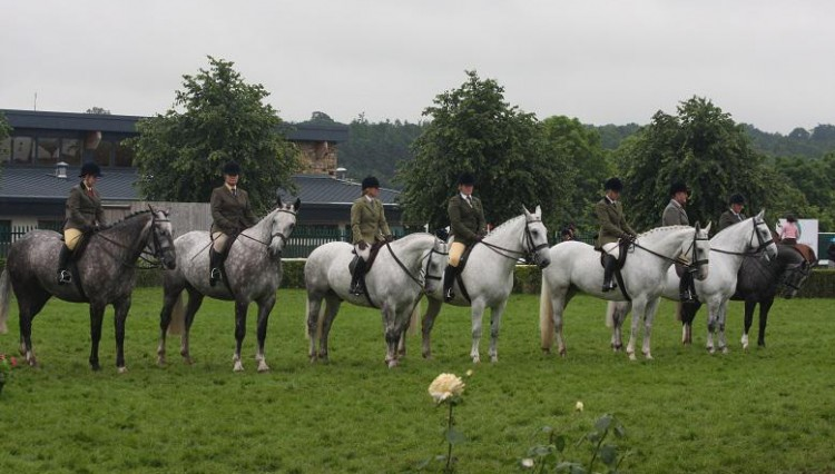 Irish Draughts line up 750x426 - Great Yorkshire Show rained off