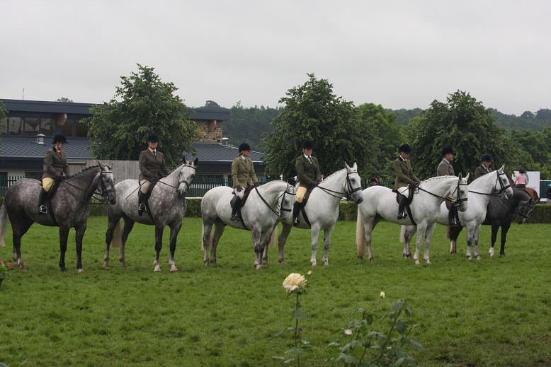 Irish Draughts line up - Great Yorkshire Show rained off