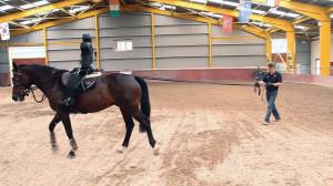 ArdallSR2 2 300x168 - Introducing The New Ardall SR2 For safer riders and happier horses.