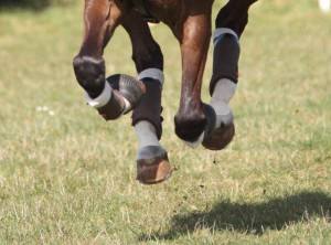 Kentucky Tendon Grip In Action Under Boots