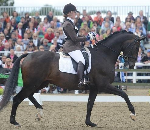 Shearwater Champion 493x426 - Young horse title for Yorkshire rider