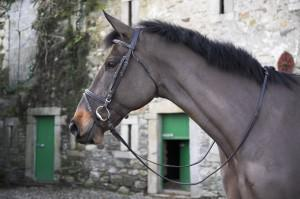 Eds classic leather bridle