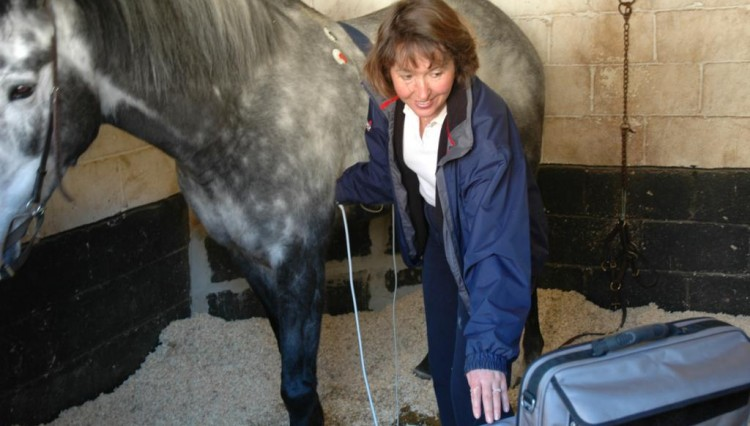 DSC 0071 750x426 - CANCELLED Equestrian Lecture: What makes your horse tick?