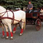 carriage_img_8