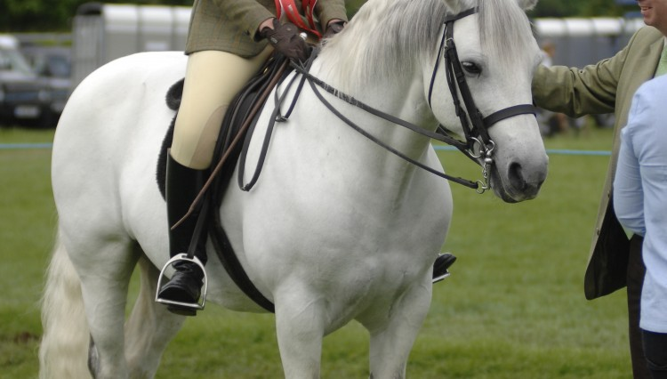 Sophie Dowdeswell 2012 750x426 - Win Family Tickets for Northumberland County Show