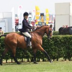 Ex-racehorse Chivola in the hacks