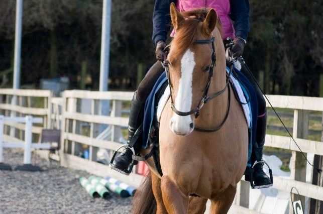 MFT Sponsored Rider 643x426 - Gayle Bloomfield wins sponsorship from Mirrors for Training!
