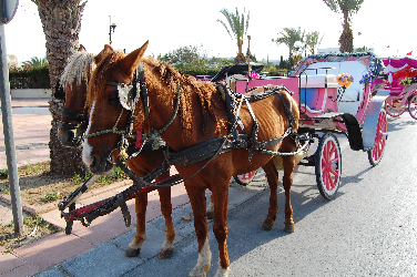 SPANA horses - SPANA launches responsible tourism guide