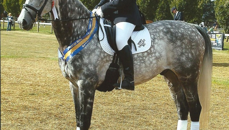 Zen Privegiving Lincoln 2013 20003 750x426 - Master Saddler Triumphs at British Riding Clubs National Championships