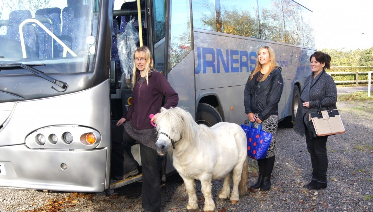 Buster found at a bus stop 750x426 - HorseWorld News – Pony found abandoned at a bus stop is on a journey to recovery