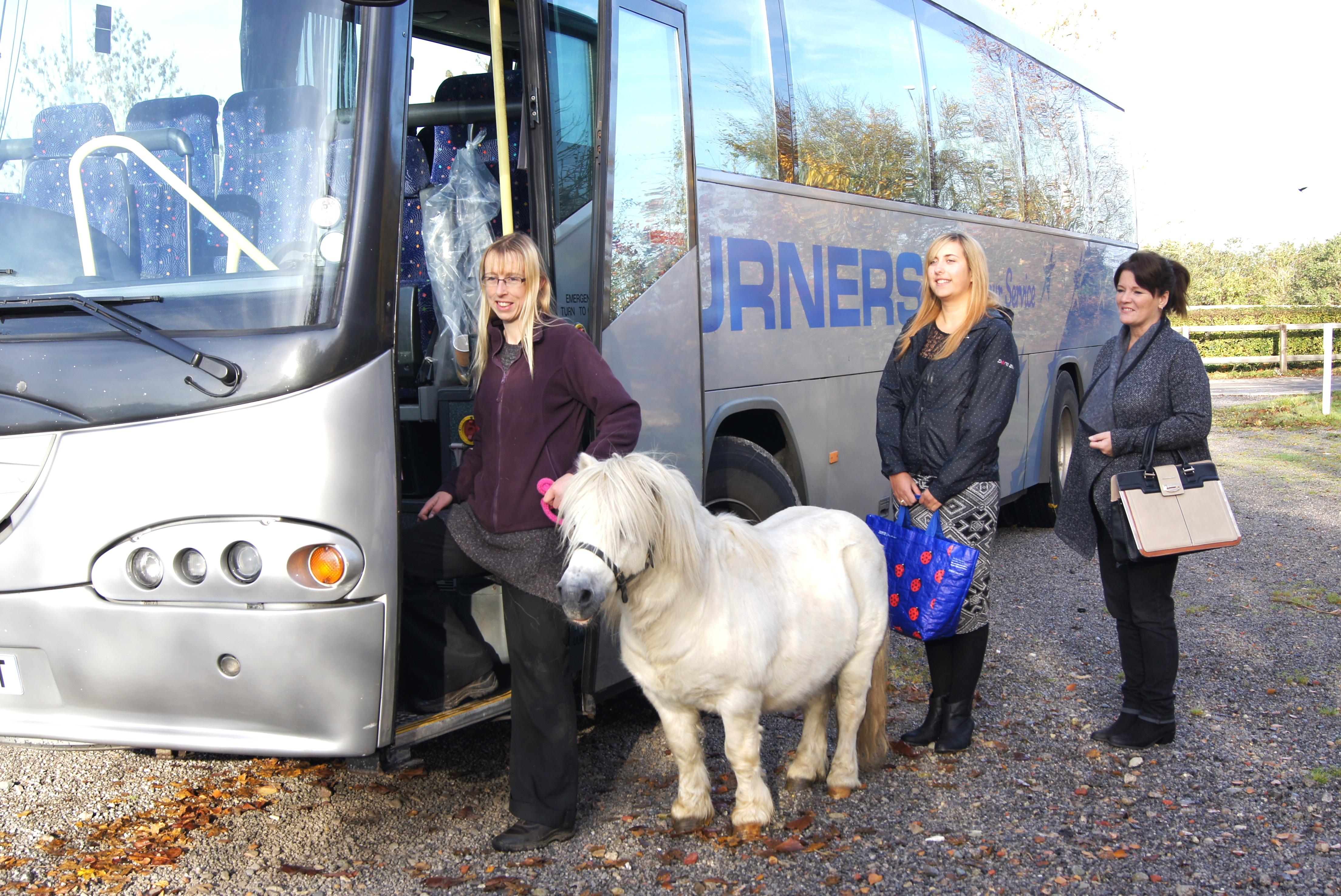 Buster found at a bus stop - HorseWorld News – Pony found abandoned at a bus stop is on a journey to recovery