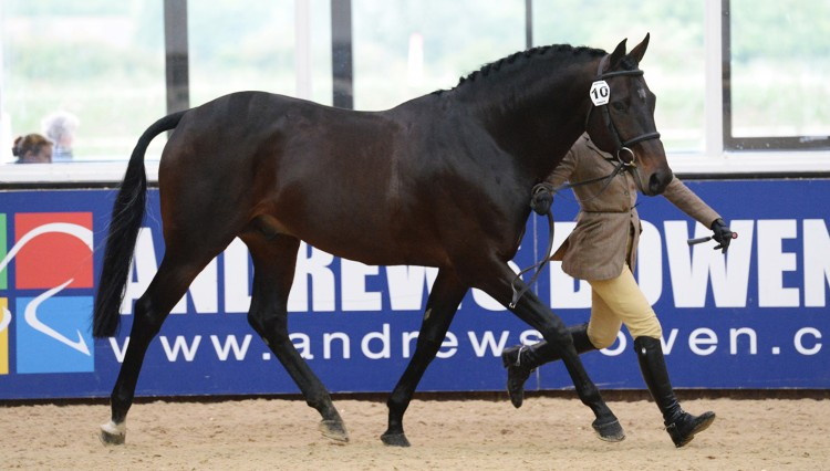 Wessex Starring Role owned by John Ford 750x426 - Star Shines Bright on TopSpec Stud Balancer