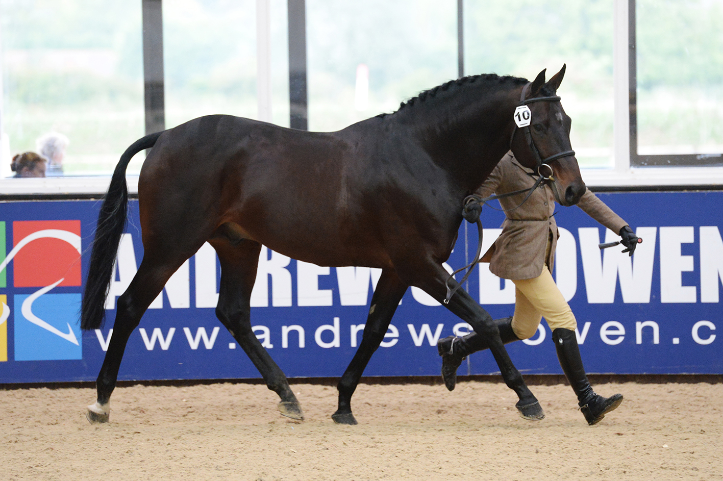 Wessex Starring Role owned by John Ford - Star Shines Bright on TopSpec Stud Balancer